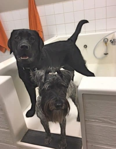 Two dogs are ready to have a bath in the DIY dog wash tub.