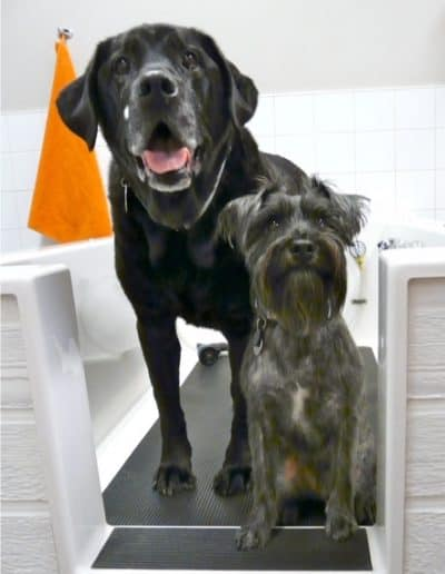 Elvis and Ridge standing in the DIY dog wash.