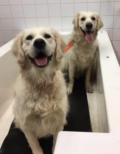Two dogs having fun in the DIY dog wash tub.
